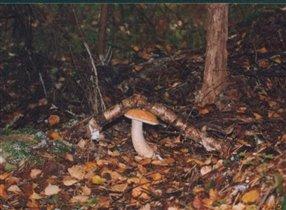 хитрый гриб :)