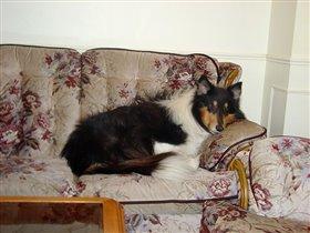 колли на диване
