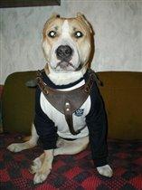 чисто моряцкий пёс
