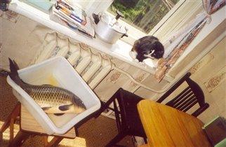 Барсук гипнотизирует рыбу.