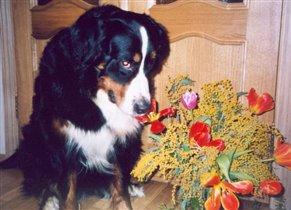 Цветы для Лауры