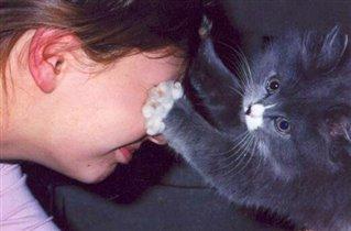Игры в кошки - мышки :)