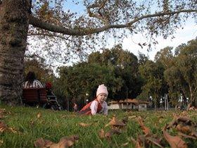 декабрь в парке