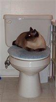 Туалетный кот