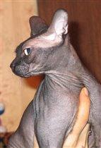 кошка Лилу