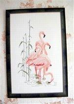 Фламинго (Flamingo)
