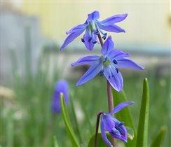 Самый красивый синий цвет