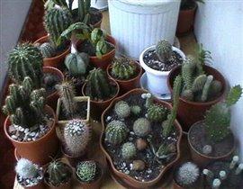 Колекция кактусов