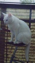 Философская кошка Лиса
