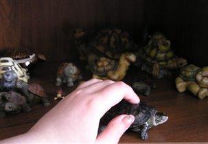 Егор и моя коллекция черепах