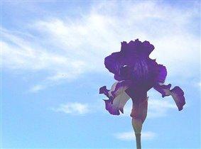 Небесный цветок