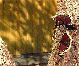 Специально для любителей бабочек