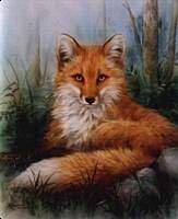 fox Woodland Beauty
