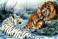 Tiger Spring Oasis