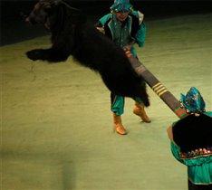Летящий медведь