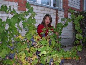 в винограде на Урале!