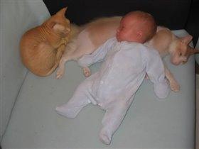 Федор и кошки
