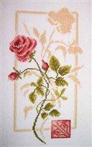 Отражение Розы. Золотое руно.