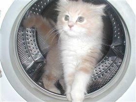 Кот космонафт , гордо вышагивает из своего космолёта