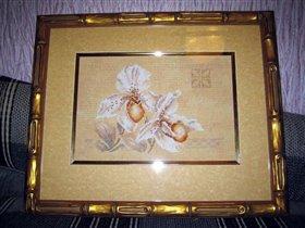 орхидея Ланарте