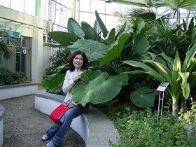 Ботанический сад в Чунчоне