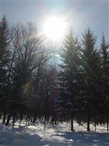 Зимний лес полон чудес!