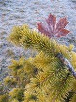 От осени к зиме