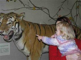 Это не лев, это ТИГР