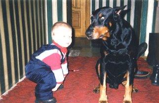 Маленький хозяин у большой собаки.