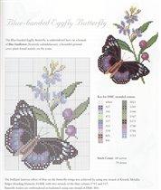 Eggfly butterflies