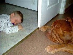 Верный друг рядом даже во сне