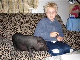 моя любимая свинка
