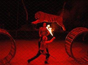 'Красный цветок' и тигры