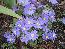Весенние цветы (название неизвестно)