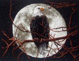 Орел в лунном свете.