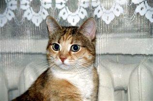 Кошка Кеша