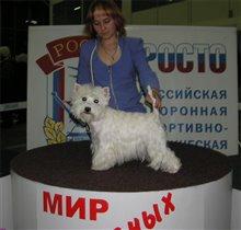 Чемпион Росси и РКФ