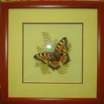бабочка Дим