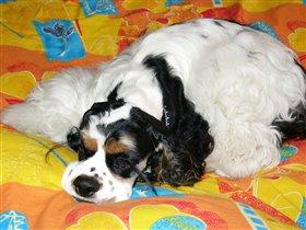 это не игрушка-это сонный пёс