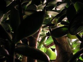 Домашние джунгли 2