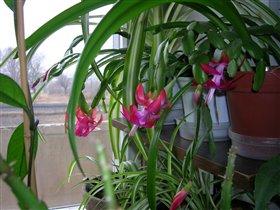 Цветущий кактус 2