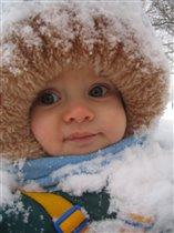 снежный одуванчик