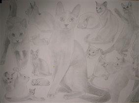 Кошечки карандашом.