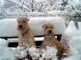 Мои любимые собаки в первый день снега
