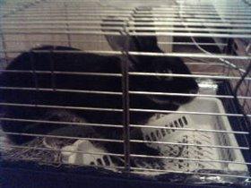 Наш кролик Кузя