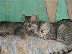 Подросшие коты