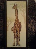 Жирафы  Dimensions