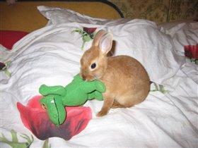 Зена - королева кроликов