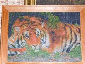 Тигр уже в рамке