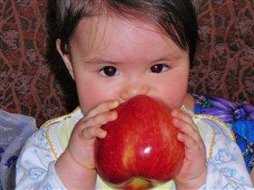 Яблочко размером с мою голову.